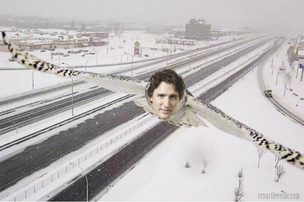 Hibou Trudeau