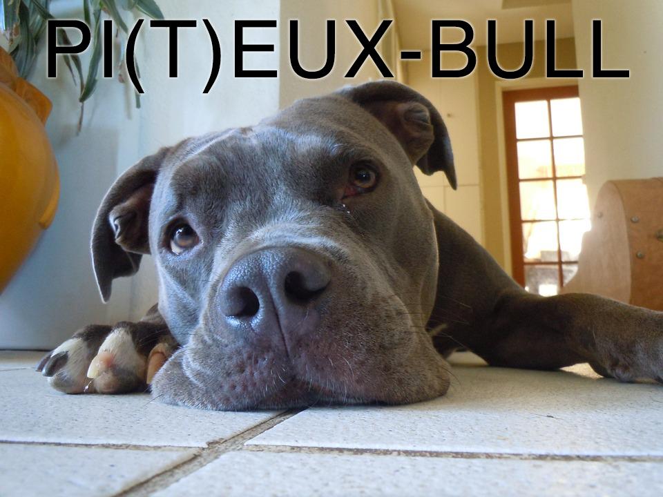 pitbull religion charte